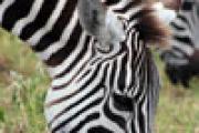 3. Tourtag: Ngorongoro Crater